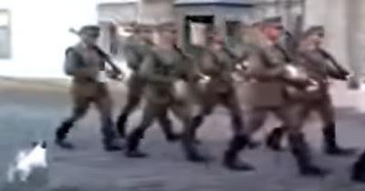 ڤيديۆ: سەگێك پەلامار نمايشێكى سەربازى دەدات Video: A dog attacking a military parade