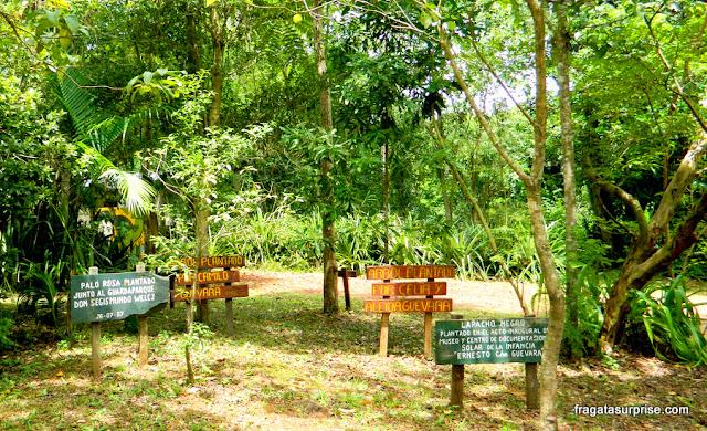 Árvores plantadas pelos filhos de Che Guevara no sítio onde ele passou os dois primeiros anos de vida