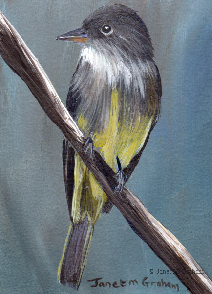Eastern Wood Pewee ACEO in acrylics