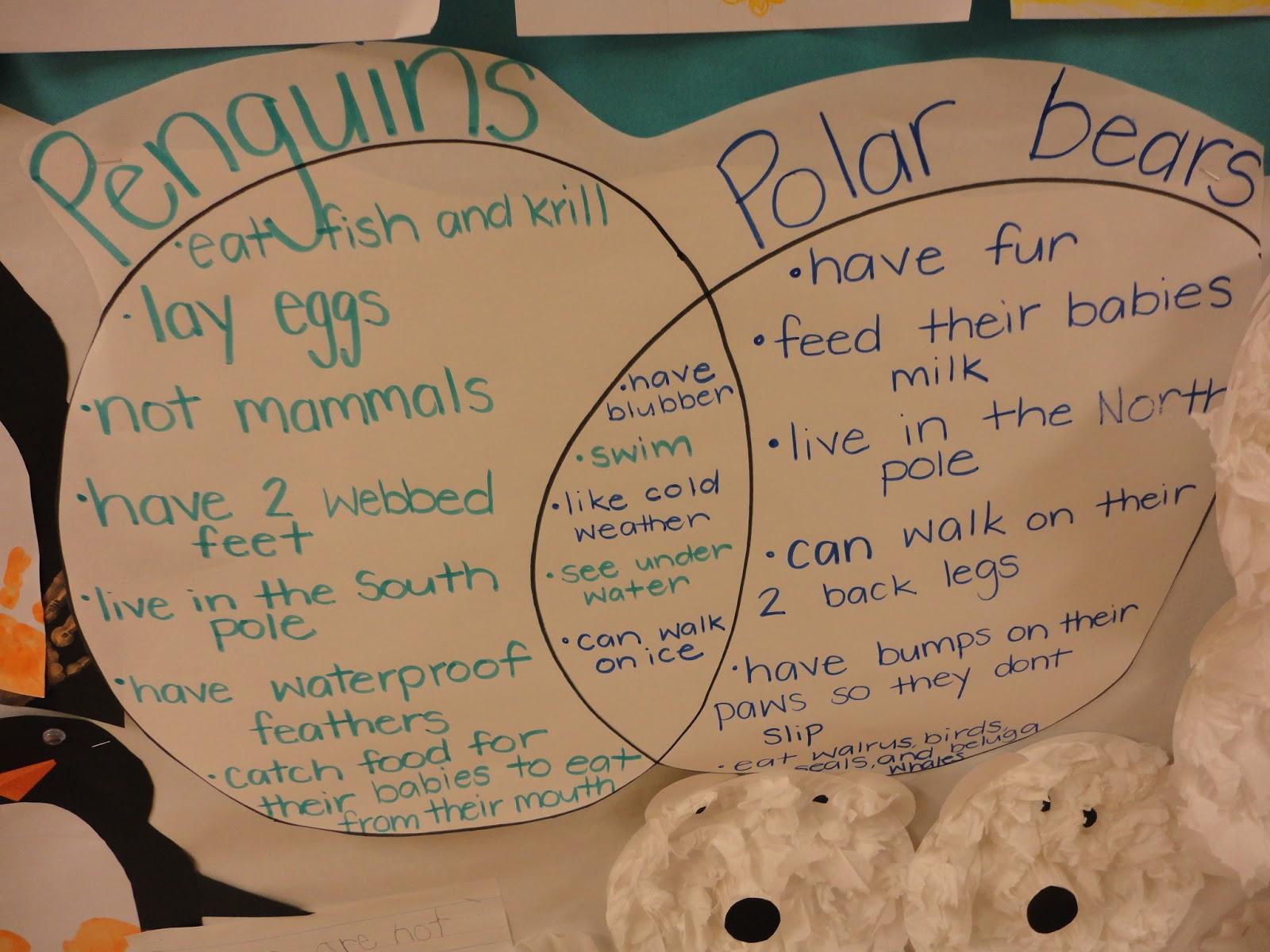 polar bear diagram ba falcon ecu wiring mrs ross 39 running rascals jan 14 17