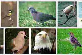 Contoh hewan aves