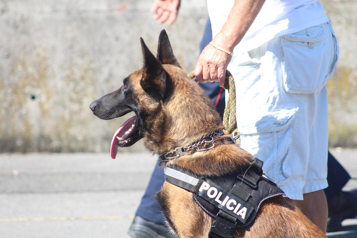 Exhibición de perros policía en Retuerto