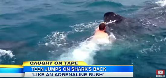 Garoto pula costas tubarão baleia