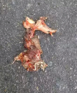 Piece of flesh in an accident scene