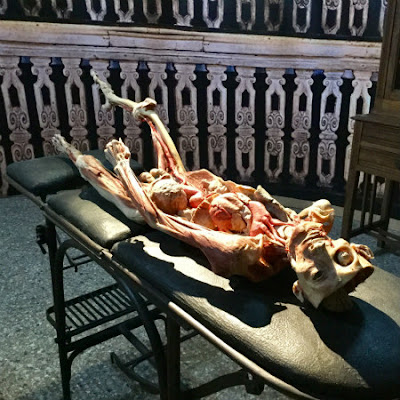 "VENICE INSIDER - Plastinated human body in ""Venice Secrets"" - Photo: Cat Bauer"