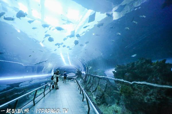 走進海底隧道,感覺也在海裡悠游一樣