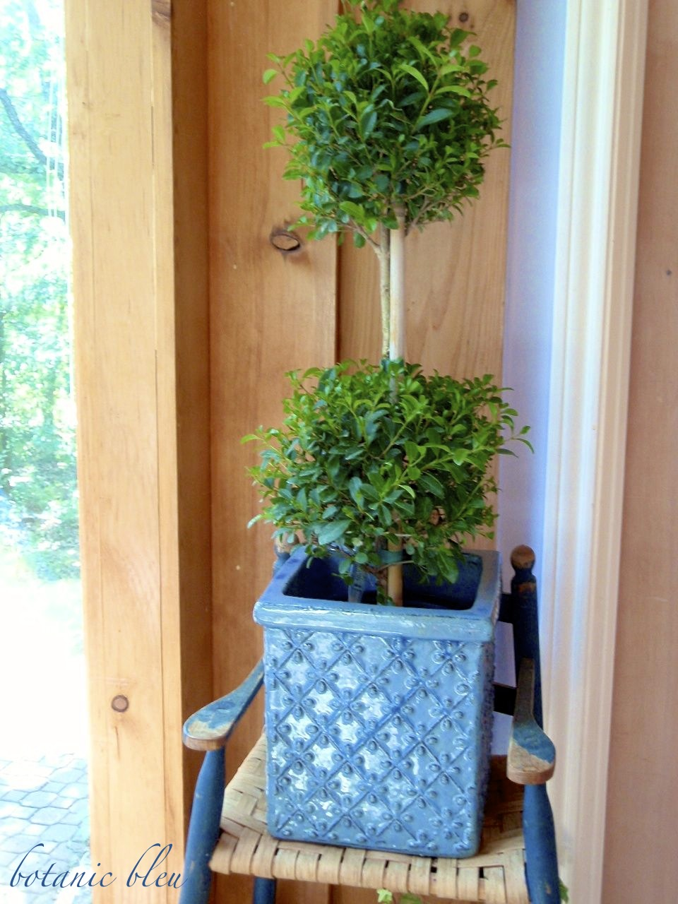 tips-for-keeping-myrtle-topiaries