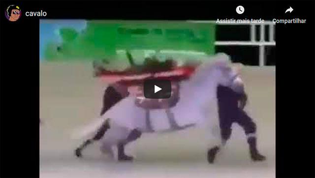 https://www.ahnegao.com.br/2019/05/alguem-teve-a-pessima-ideia-de-trocar-a-ambulancia-por-um-cavalo.html