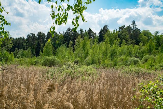 Vilsecker-Muldenweg Amberg-Sulzbacher-Land-06