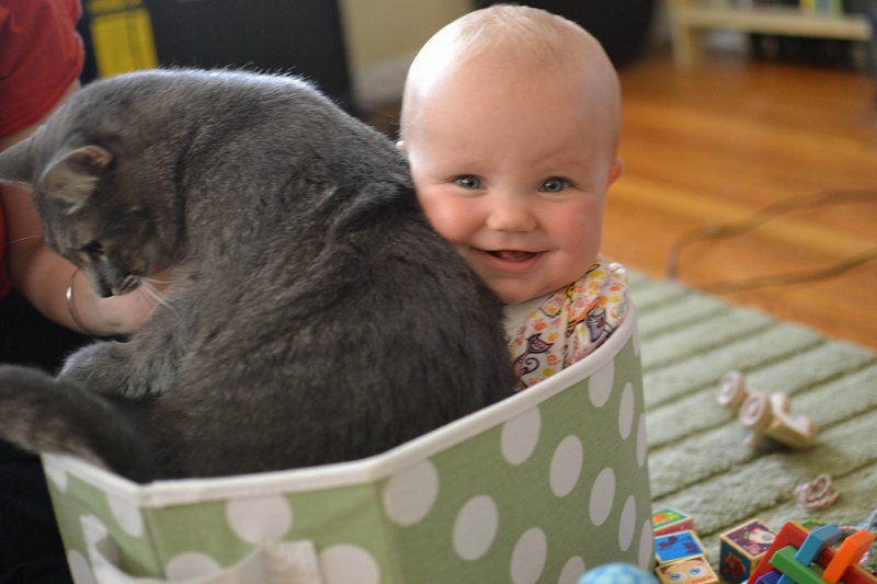 Are Your Cats Safe for Your Baby?