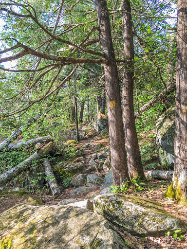 Rocks and roots make for tricky hiking on the Grandfather Segment of the IAT