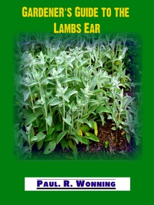 Gardener's Guide to Lamb's Ears