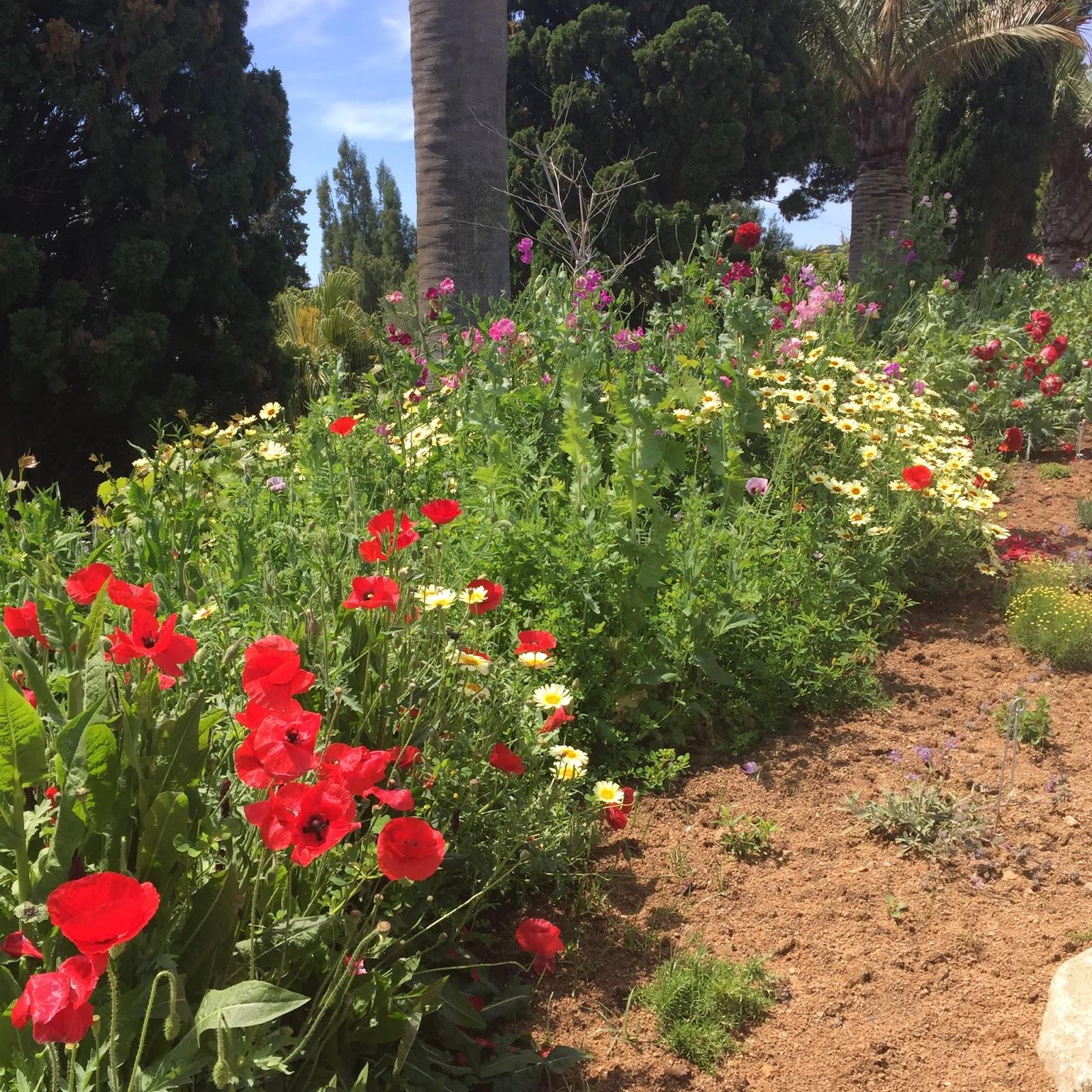 Gem 39 s country life visiting jardin botanico marimurta for Jardin botanico nocturno 2016