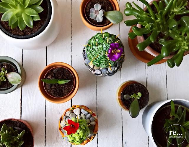 cactus, cactus art, paper weaving, paper wicker, kaktusy, papierowa wiklina, casket, szkatułka