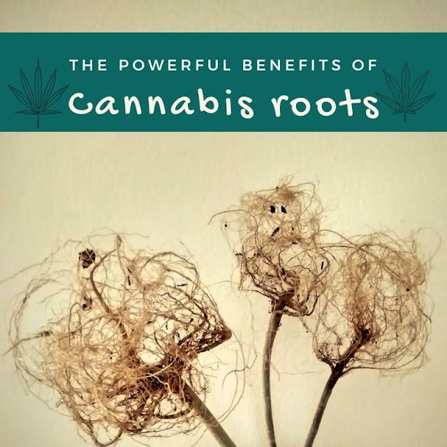 cannabis ayurveda