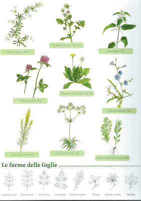 Brochure created by the Rete orti botanici lombardia, called Piante degli incolti