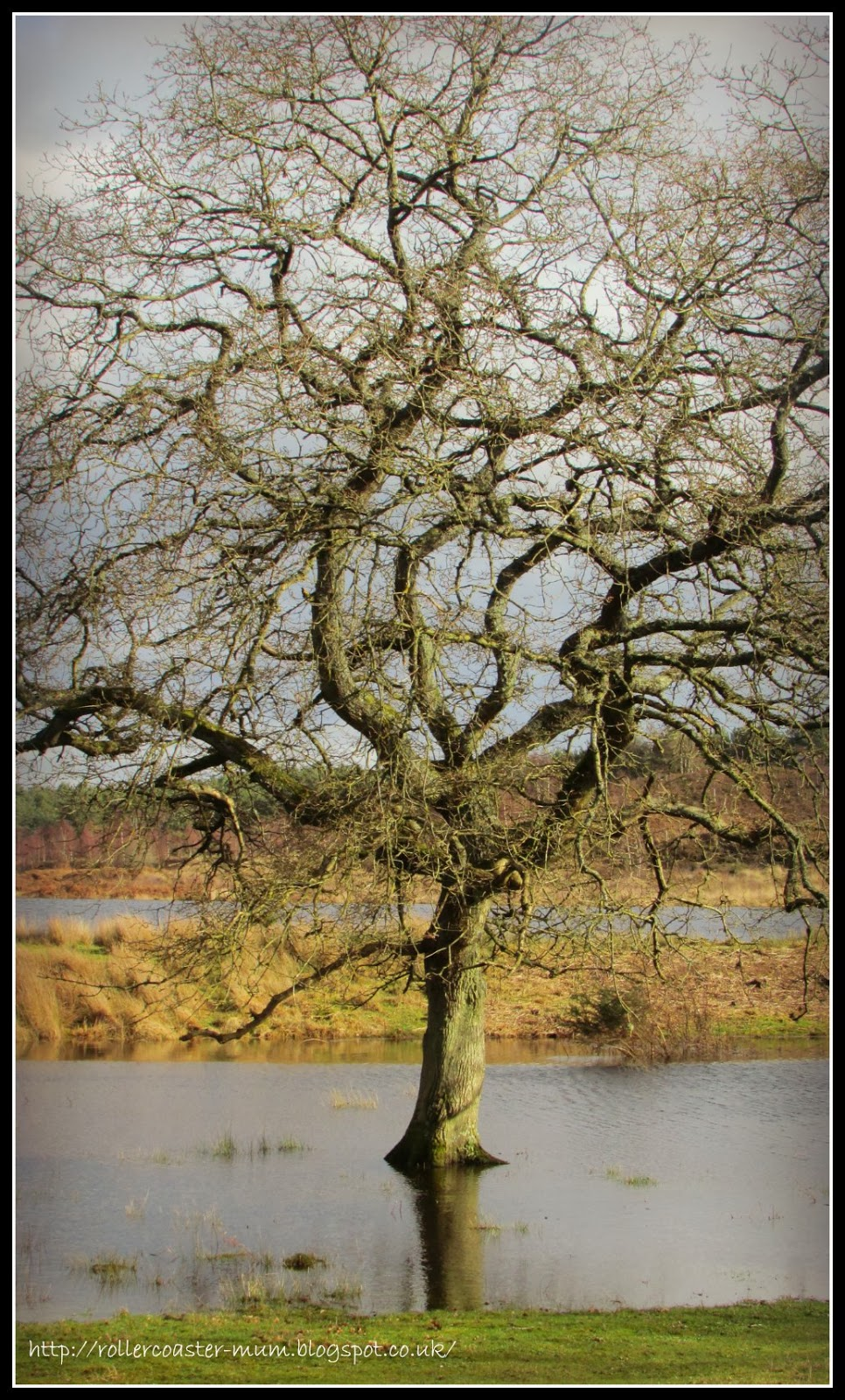 tree in the floods