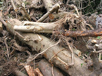 伐採された樹木