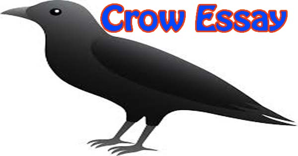 The crow essay in English - Hania Naz
