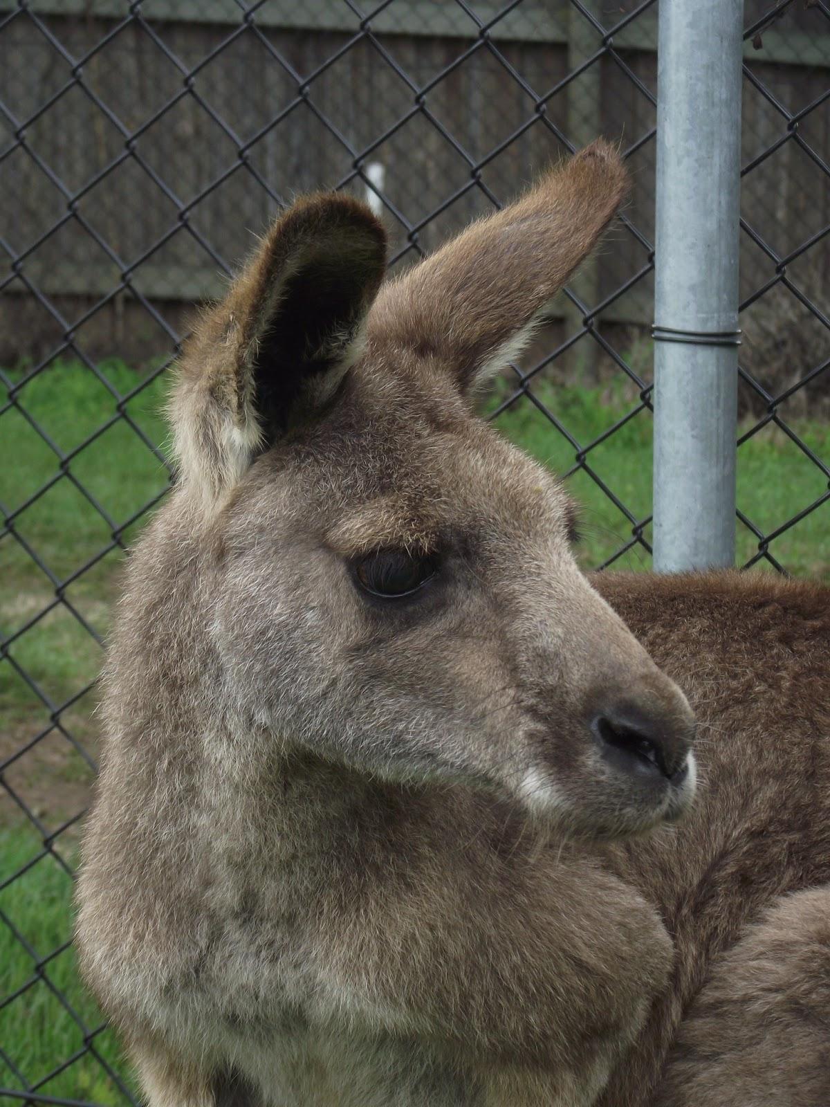 Meine Abenteuer In Australien Brisbane Lone Pine Koala