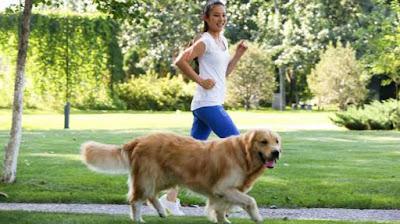Ideas para perros jóvenes