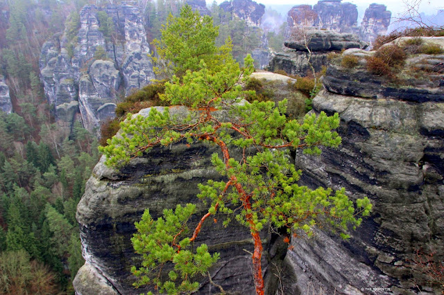 Visit Saxon Switzerland National Park in Germany