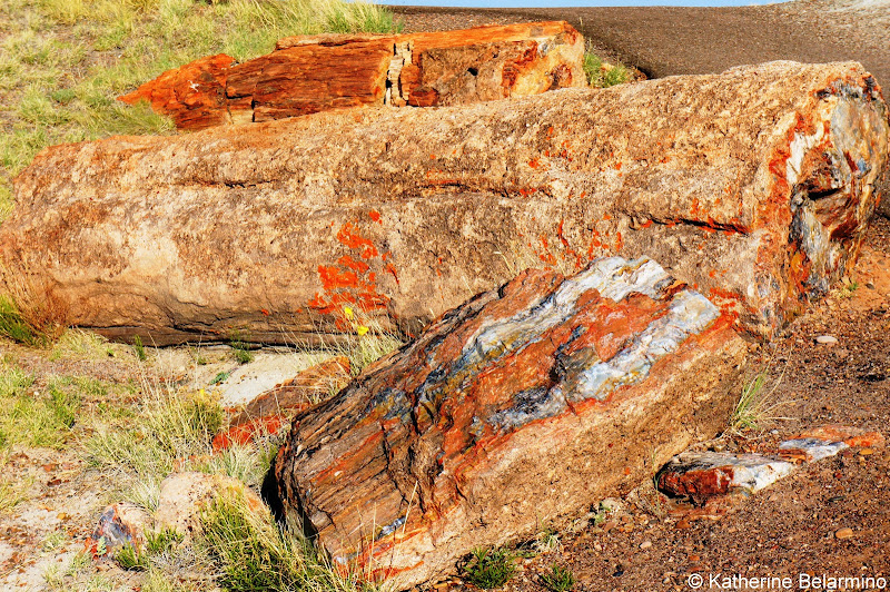 Petrified Forest National Park Arizona Route 66 Road Trip Attractions