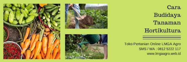 budidaya,budidaya tanaman,hortikultura,tanaman,lmga agro