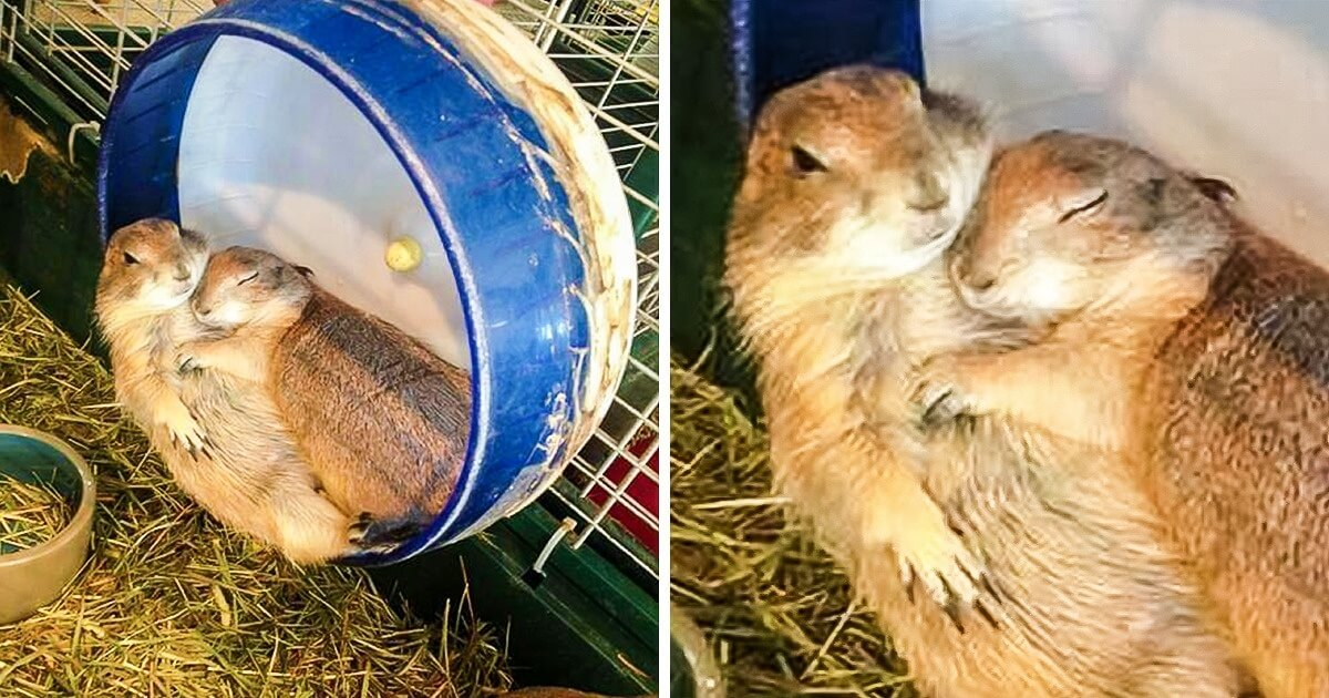23 Heart-Melting Pictures Of Animals Who Love Each Other Too Much