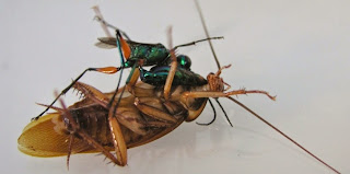 https://bio-orbis.blogspot.com/2014/04/vespa-esmeralda-devoradora-de-cerebros.html