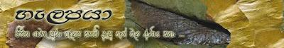 Image result for halapa kade blog