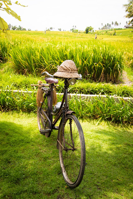 Risaie-Rice fields-Bali