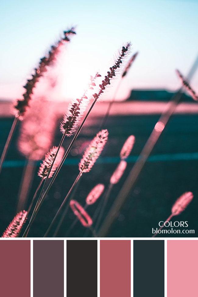 paletas_de_colores_21_variedad_de_color_2