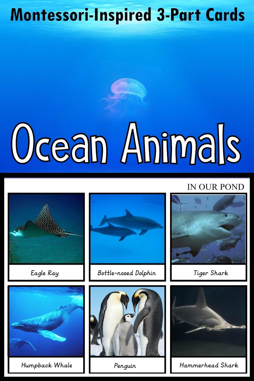 8a2da8487aaed9 Montessori-Inspired 3-Part Matching Card for Safari Ltd Ocean toob    In