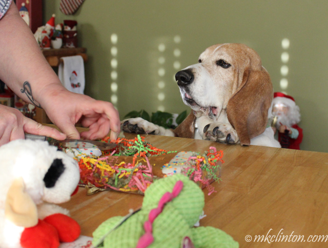 Basset with birthday cookie and toys