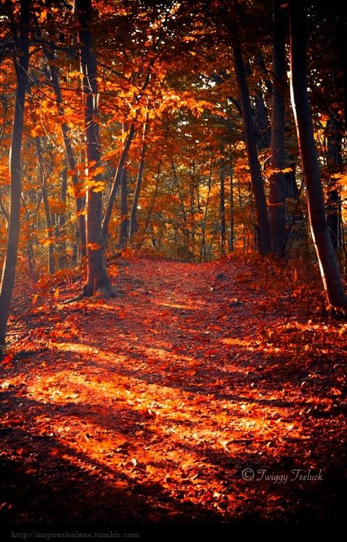 Fall In Love Leaf Wallpaper Ren 233 E Finberg Tells All In Her Blog Of Her Adventures