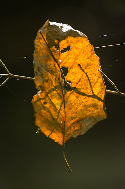 Turning Leaf, Clear Creek Natural Heritage Center