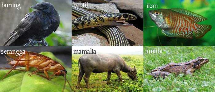 Bagaimana Cara Binatang Ini Bernafas