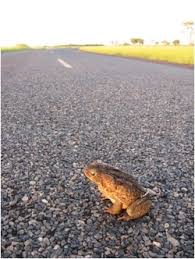 ono pink journal the toad on the road fuss