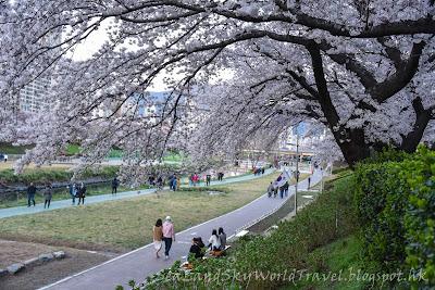 南韓釜山東萊櫻花