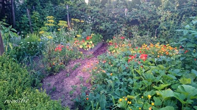 sprawdzone-rosliny-na-warzywniak