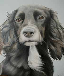 Pet portrait oil on canvas Cocker Spaniel