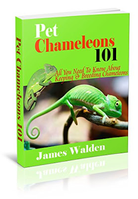 Pet Chameleons 101, All You Need To Know About Keeping & Breeding Chameleons