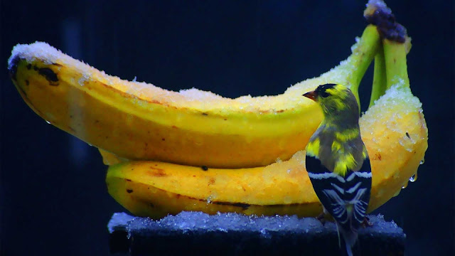 wallpaper burung dan pisang