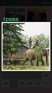 несколько слонов на спинах которых лежит трава