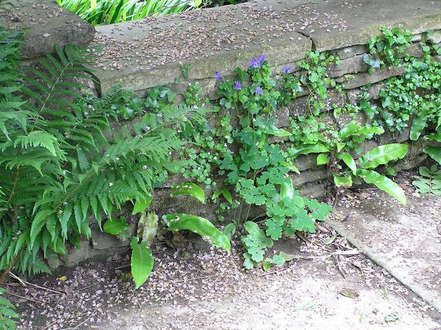 rośliny na murku