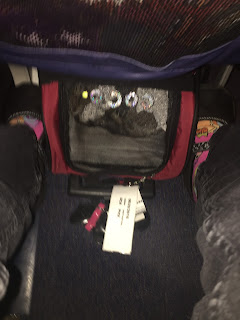 Coco, the Cornish Rex cat, in her Snoozer carrier, on the plane flying to Phoenix
