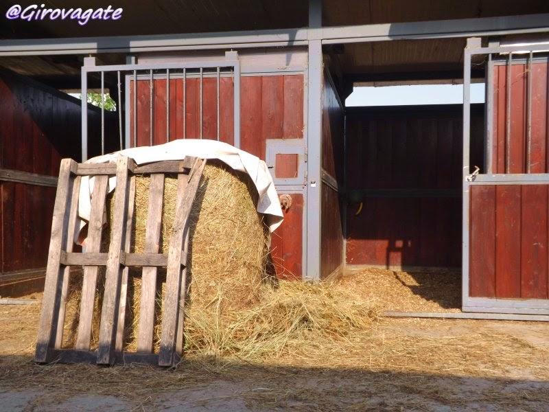 sportboom club ippico bellosguardo cavallo
