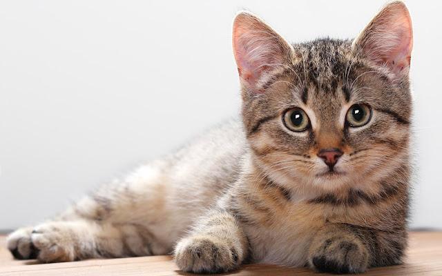 Mitologi Kucing