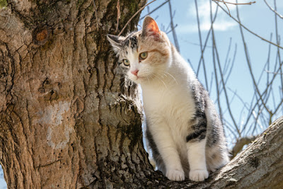 When cats get stuck in trees, it's not because they're klutzes.